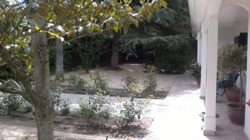 Plantaciones 2